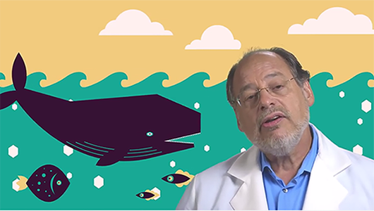 Dr. Michael Steinmetz explains why salt water stings our eyes, why it does not sting whales' eyes, and whether opening our eyes in a pool is harmful.