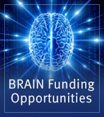 Brain funding opportunities