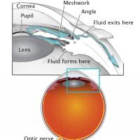 Image shows eye globe, optic nerve, lens, cornea, pupil, meshwork, angle, and were fluid forms and exits the front of the eye.