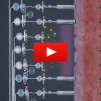 photoreceptors and retinal ganglion cells are shown on a video playbutton.
