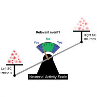 "A scale with left superior colliculus neurons more activated on left and right superior colliculus neurons less activated on the right, and scale weighed down to the left. Needle on scale points to ""yes"", meaning detection of relevant event."